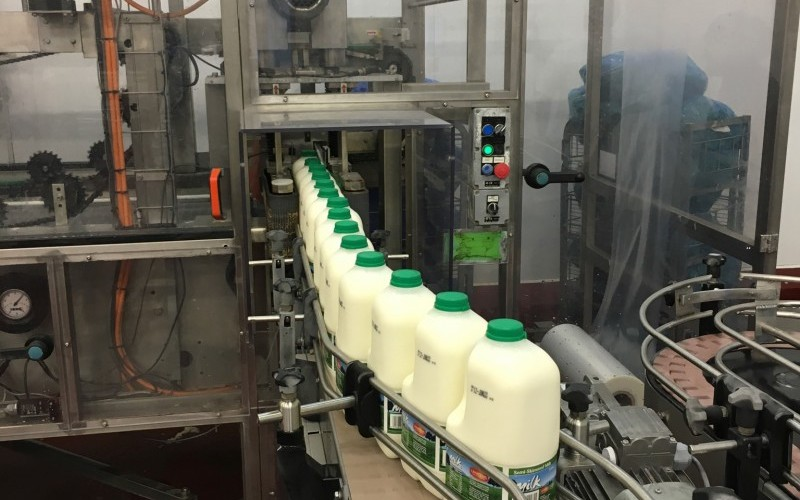 Milk Processing Dairy
